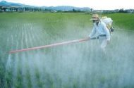 Farm Pesticide May Be Linked to Cancer, Study Says