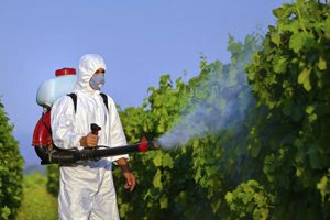 Pesticide cancer links
