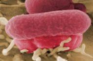 E. Coli Outbreak