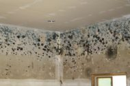 Toxic Mold in Westbury, Long Island Apartment Complex Forces Residents to Relocate