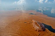 Transocean Safety Record Scrutinized After Oil Spill