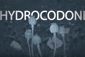 Hydrocodone Side Effects