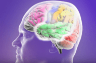 Trileptal Side Effects May Result In Stevens-Johnson Syndrome Lawsuits