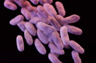 VRE Infections Exposure Lawsuits