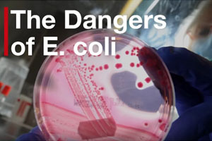 E. Coli Outbreak Prompts Beef, Veal, Bison Products Voluntary Recall