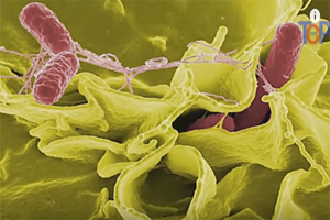 4 in state part of salmonella outbreak