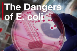 Industry, government join E. coli fight