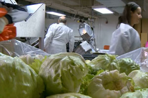Romaine from California May be Tied to Canada E. coli