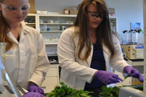 E. Coli Threat to Leafy Greens Demands More Safety Regulations, Research