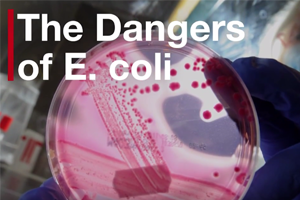 Officials Probe Five E. Coli Cases