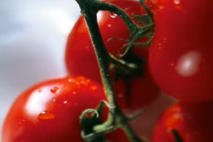 Raw Tomatoes Cited as Source of New Mexico Salmonella