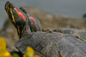 Over 100 Salmonella Cases Caused by Exposure to Pet Turtles