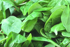 Victims of Tainted Spinach, Peanut Butter Urge for Better Oversight