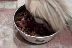 FDA Finds Dog Food Not Properly Tested