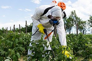 Roundup Weed Killer Recognized as Carcinogenic