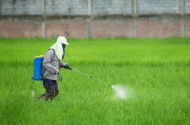 Homes In New York Filled with Dangerous Pesticides According to New Research