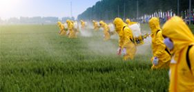 Workers spray Roundup wearing protective suits to guard against getting lymphoma