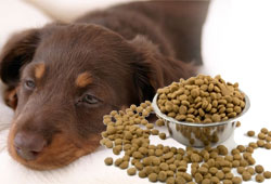 16 Now Sick In Dog Food Salmonella Outbreak