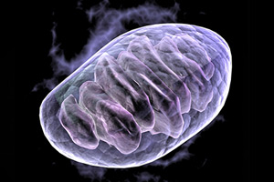 Levaquin & Other Antibiotics Linked to Mitochondrial Toxicity