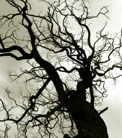 New York City Named In Injury Lawsuits From Neglected Trees
