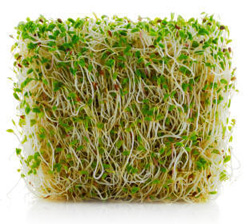 New York Firm Recalls Alfalfa Sprouts, Clover Sprouts for Listeria