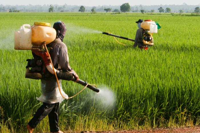 Pesticide_Exposure_During_Pregnancy_May_Increase_Autism