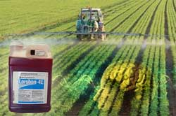 Prenatal exposure to a common pesticide has been linked to brain changes, according to an emerging study  The pesticide, chlorpyrifos, which was banned in 2001 by the Environmental Protection Agency (EPA) for residential use, is still allowed for use on crops and can be sprayed in public places, said WebMD. In 2007, the Natural Resources Defense Council (NRDC) petitioned the EPA to ban chlorpyrifos in agricultural use; the EPA is reviewing chlorpyrifos use in agriculture.