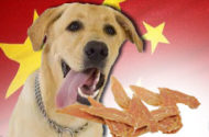 FDA investigating potential link between chicken jerky dog treats from China and spate of pet illnesses