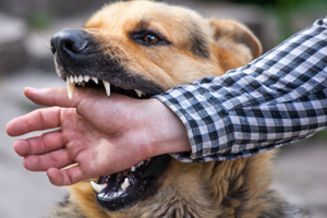 Physical wounds heal but the emotional scars from a dog bite endure
