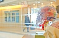 Traumatic Brain Injury: Education and Resources