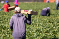 Farmworkers File Lawsuits Over the EPA's Approval of Paraquat